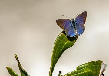 Blue-Rest